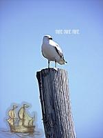 goofy-seagull.jpg