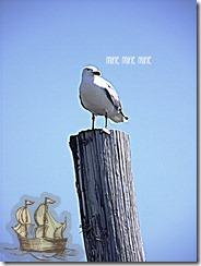 goofy seagull